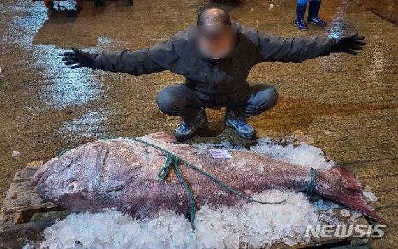 전설의 심해어 '120kg 돗돔' 부산서 판매된 금액이 무려..