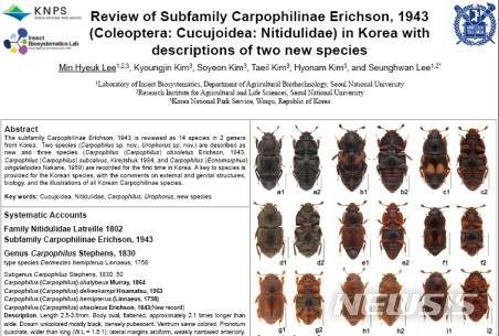 """""""반가워 벌레들아"""" 신종 곤충 19종, 오대산서 발견"""