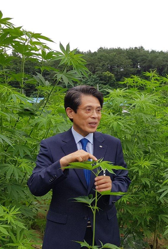 60년 만에 대마 합법화 열려…UN 마약위원회 '마약목록 삭제'