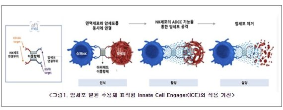 엔케이맥스, '표적형 NK면역항암제' 美FDA 미팅 완료