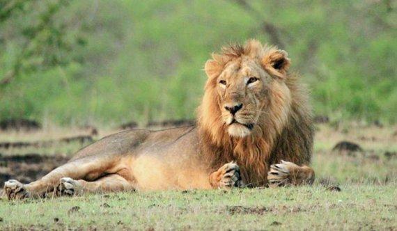 우간다 국립공원서 머리 잘린 사자 6마리 발견..도대체 왜