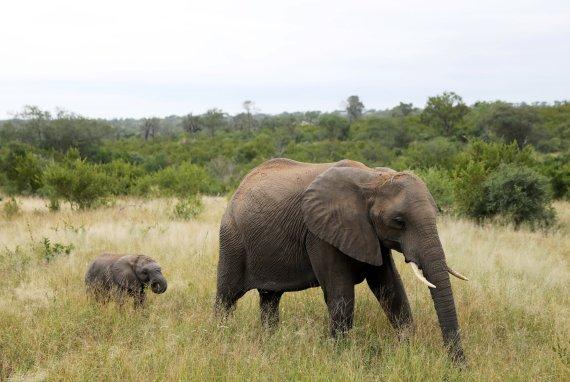 코끼리들 때문에 골머리 앓는 인도, 매년 죽는 사람이..