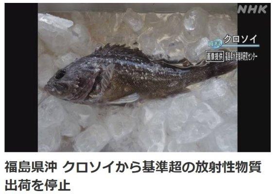 후쿠시마 앞바다서 잡힌 우럭의 상태가.. 깜짝