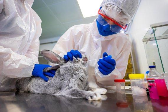 러시아, 세계 최초 동물용 코로나 백신 접종 시작
