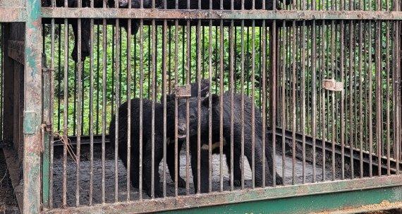 용인서 곰 2마리 탈출…포수가 1마리 사살