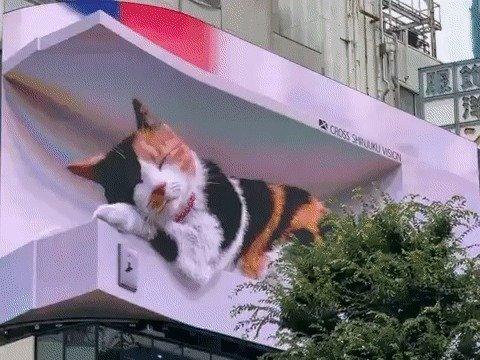 집채만 한 고양이가 도쿄 한복판에? 일본인들 '깜짝'