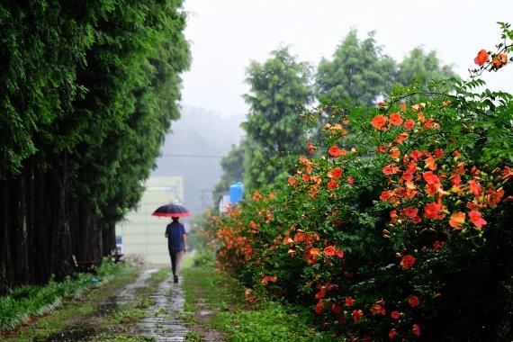 비 내리는 토요일…습도 올라 무더위는 계속