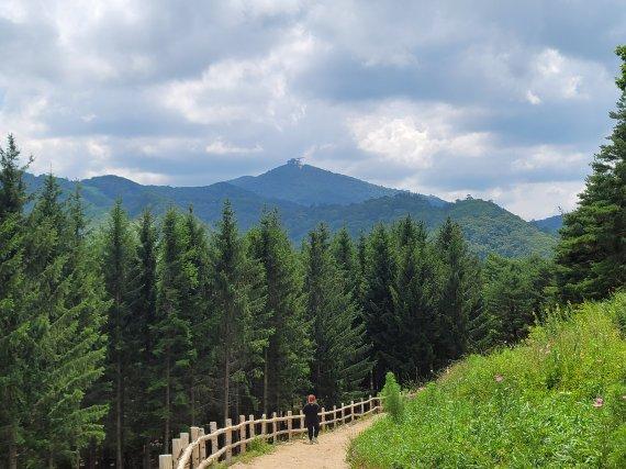 용평리조트 숲속 힐링 '애니포레' 17일 개장