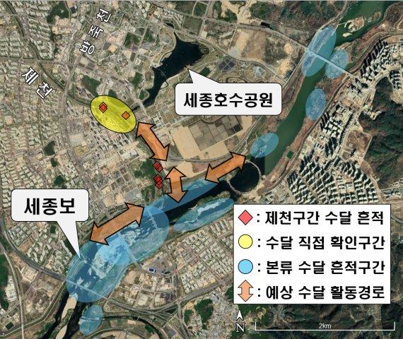 멸종위기 '수달', 세종시 도심하천 발견…서식 첫 확인