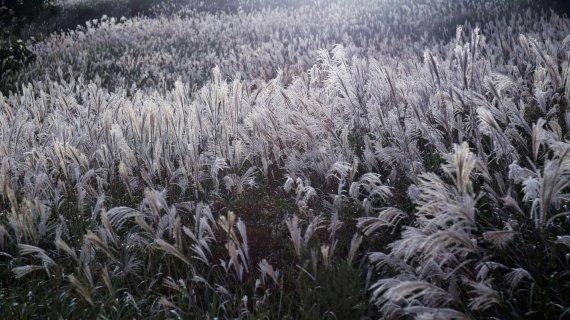영남의 금강산, 이곳 가을은 '은빛'입니다 [Weekend 레저]
